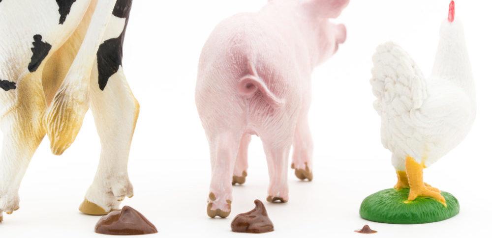動物のふん尿とは?動物のふん尿の種類や廃棄量統計の現状と課題