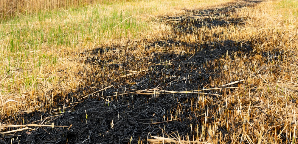 大舘市木材加工業者が木くずなどを不法投棄か、原野火災の原因となった可能性も