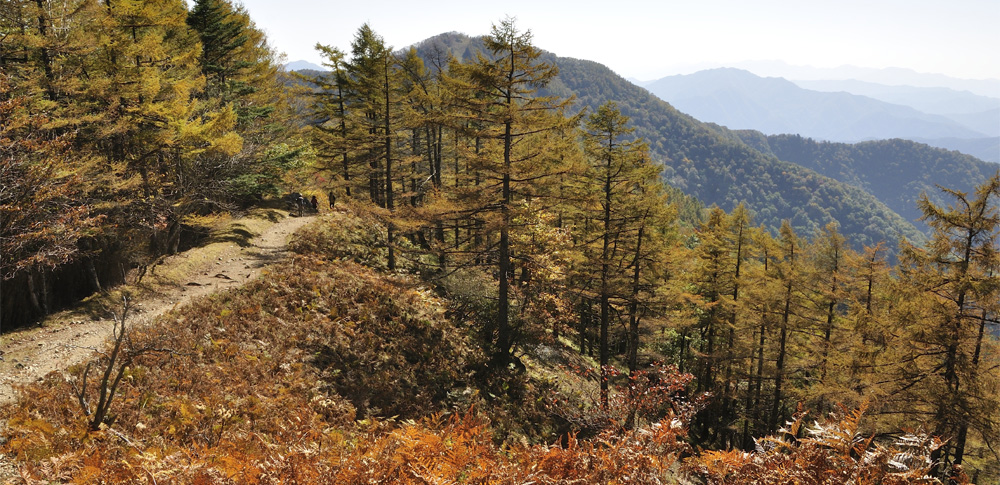 静岡県で、仲間と共謀し回収家電などを不法投棄