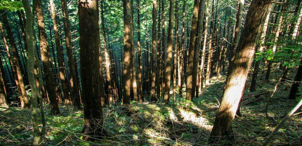 木質バイオマスとは?木質廃材を使ったエネルギーを解説